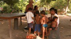 Commerce équitable et Indiens Satere Mawe