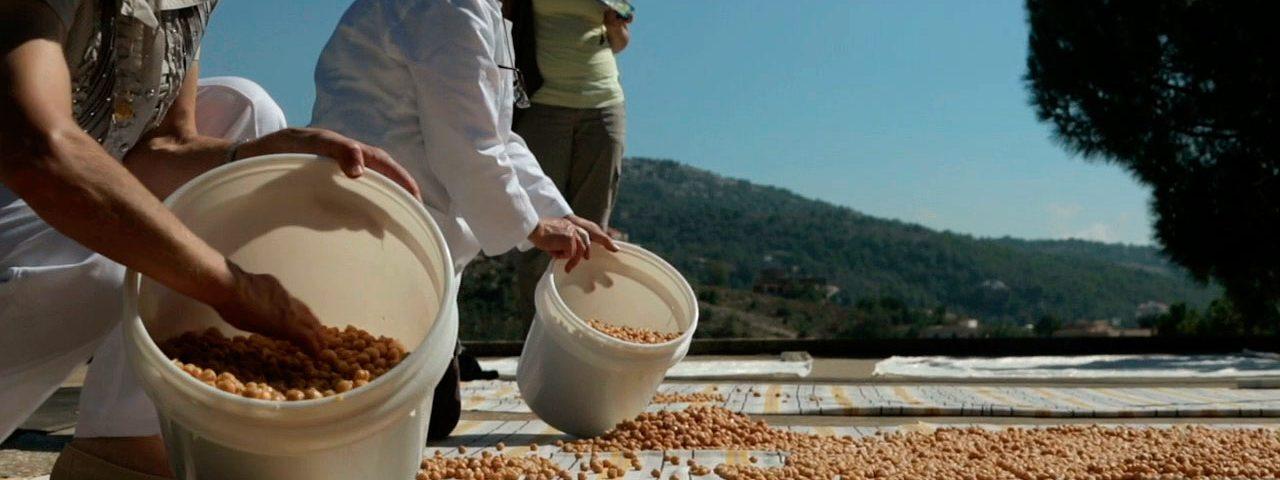 Liban : des terroirs pleins d'espoirs